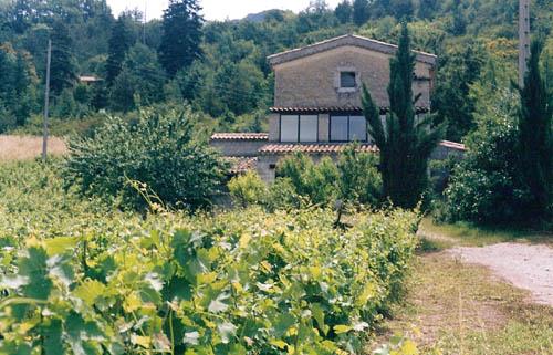 La maison en 1997, avec ses vignes
